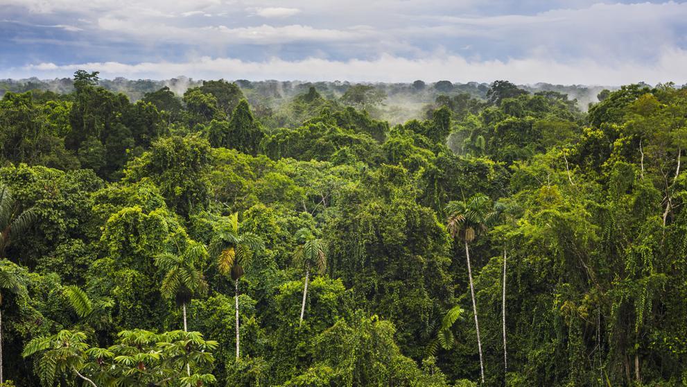 Noruega-el-primer-país-del-mundo-en-prohibir-la-deforestación