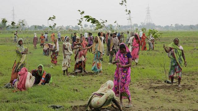Récord-Guinness-de-reforestación-En-india-plantan-66-millones-de-árboles-en-12-horas