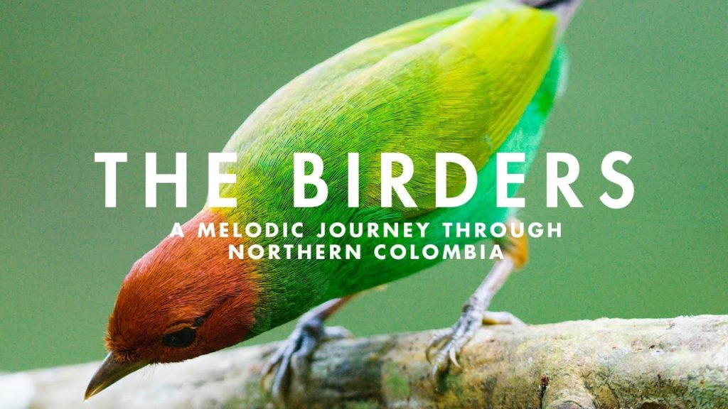 The-Birders-documental