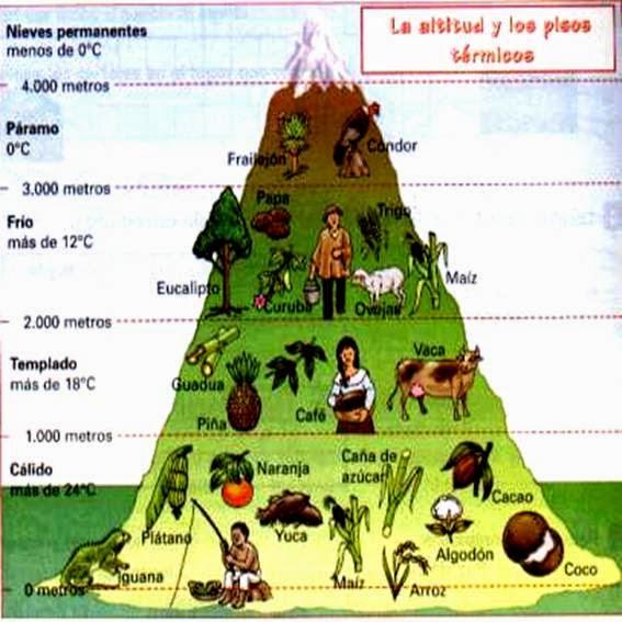 altitud y los pisos termicos-el clima en-colombia