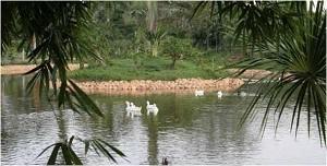 Parque-Ecológico-del-Llano-en-arauca