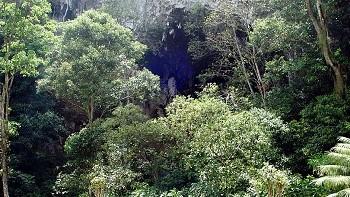 Parque-Cueva-de-los-Guácharos-lugares-del-huila