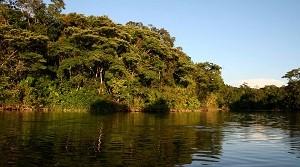 Parque-Nacional-Natural-La-Paya-en-el-putumayo