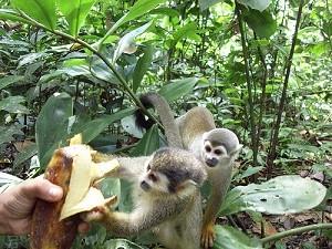 isla-de-los-micos-amazonas-leticia